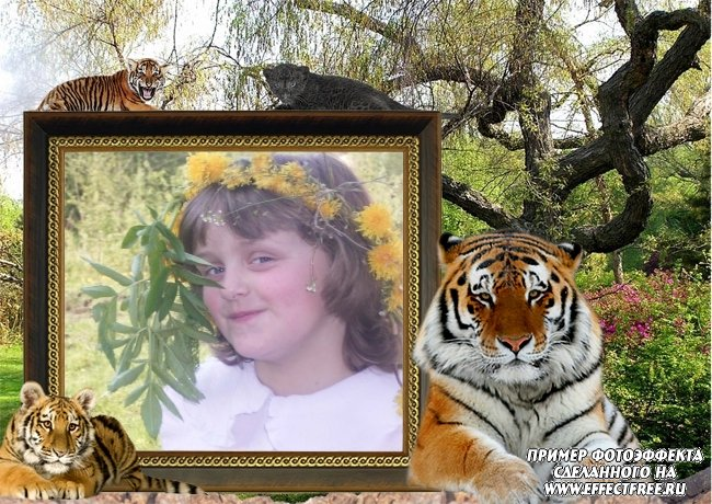 Вставить фото в рамку с тиграми, онлайн