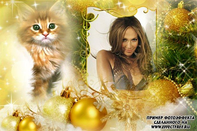 Красивая рамка с зеленоглазой кошкой, вставить фото онлайн