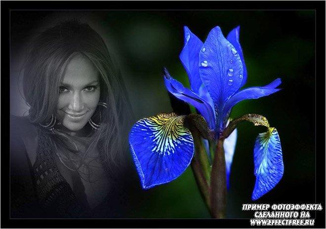 Стильный фотоэффект с синим ирисом, вставить фотографию онлайн