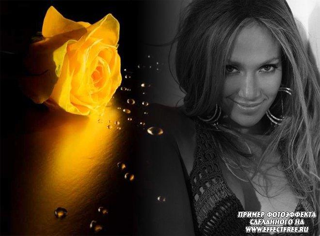 Стильный фотоколлаж с желтой розой, вставить фото онлайн