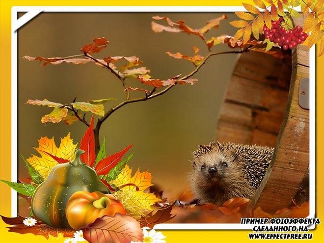 Красавица осень, самый лучший редактор фото онлайн
