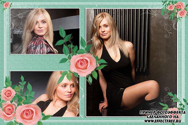 Рамочка на три фото с розами сделать онлайн