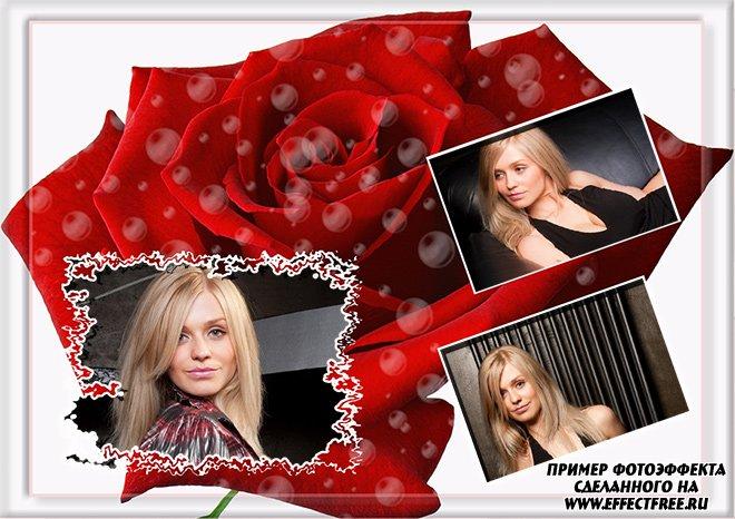 Светлая рамка с красной розой сделать онлайн