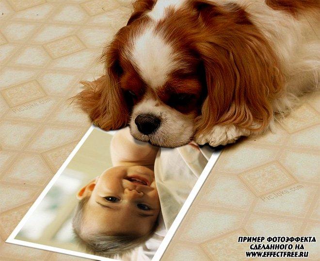Фотоприкол со щенком, сделать онлайн