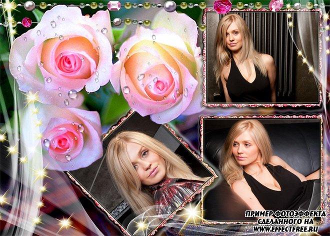 Стильная темная рамка с белыми розами на три фото, сделать онлайн