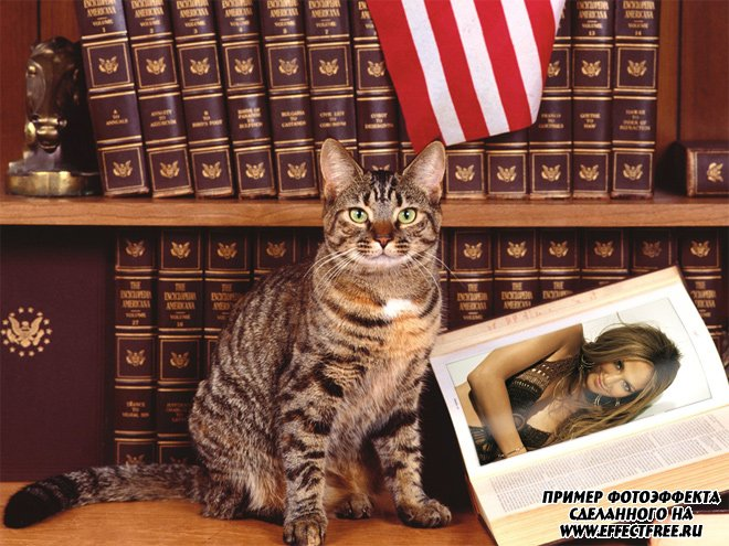 Фотоэффект на странице энциклопедии рядом с котом, вставить фотку онлайн
