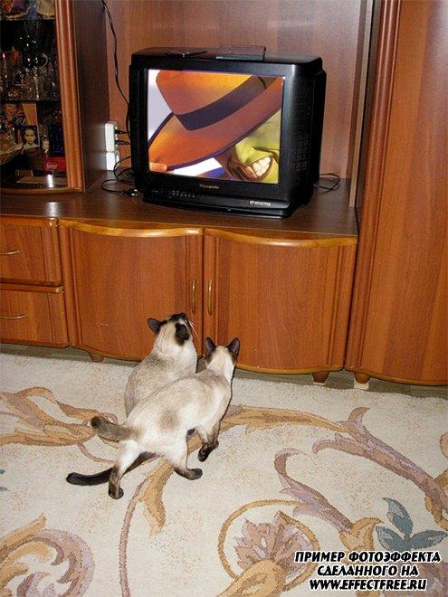 Фотоэффект на экране телевизора в комнате с котятами, сделать онлайн