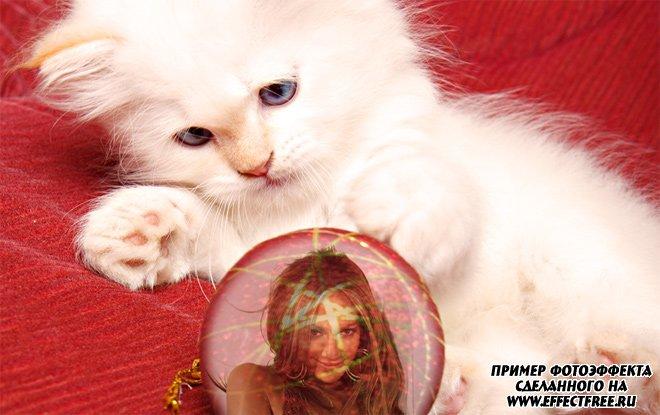 Эффект с фото с котенком, сделать в онлайн редакторе