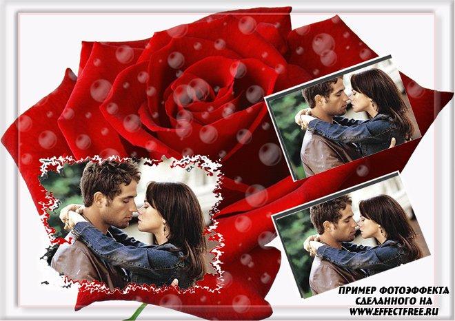 Рамочка на 3 фотографии на фоне красной розы, вставить онлайн