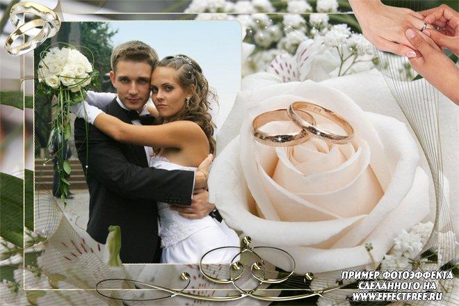 Красивые свадебные рамки с розой, вставить фото в рамку онлайн