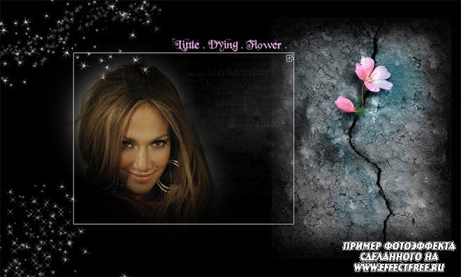 Красивый фотоэффект с цветком, сделать в онлайн редакторе
