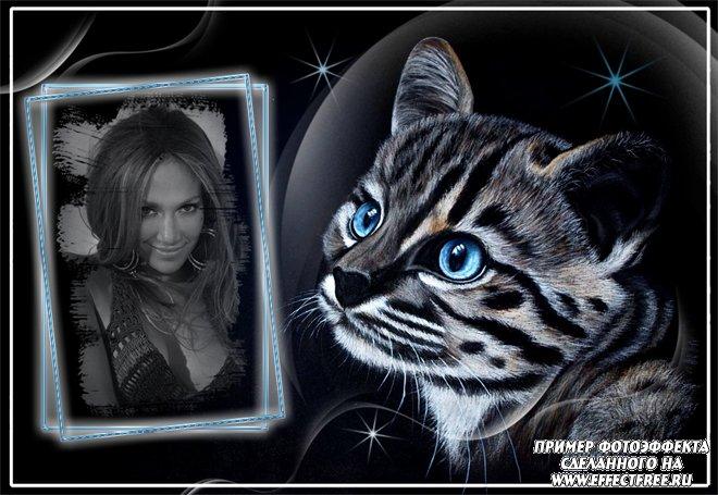 Сделать фотоэффект онлайн с котенком с голубыми глазами