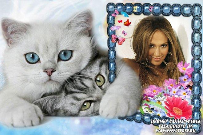 Рамка для фотографий с милыми котятами, вставить фото в рамку онлайн