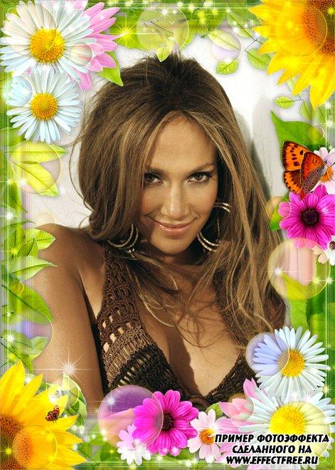 Красивая яркая рамка с ромашками, бабочками и розовыми цветами онлайн