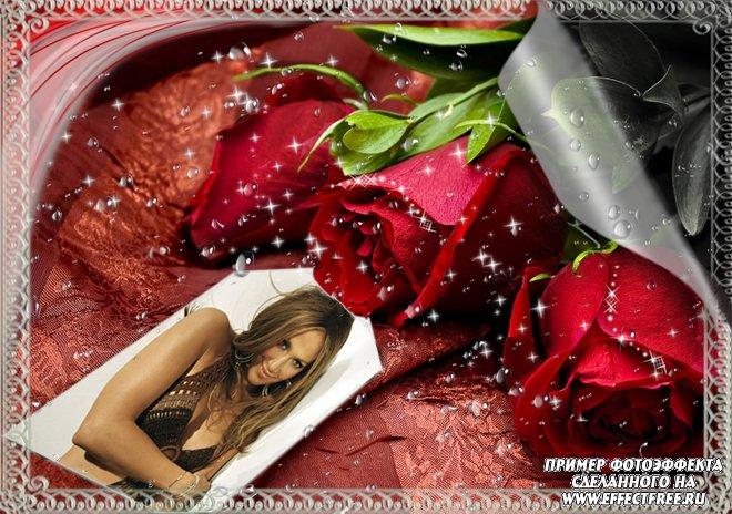 Фоторамка с шикарными красными розами, сделать в онлайн редакторе