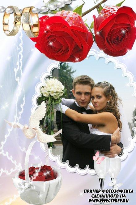 Рамка для фото с обручальными кольцами и красными розами, вставить фото онлайн