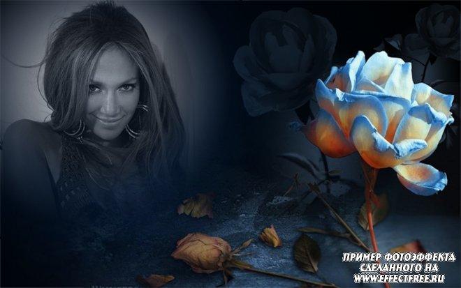 Стильный фотоэффект с синей розой на черном фоне, сделать онлайн