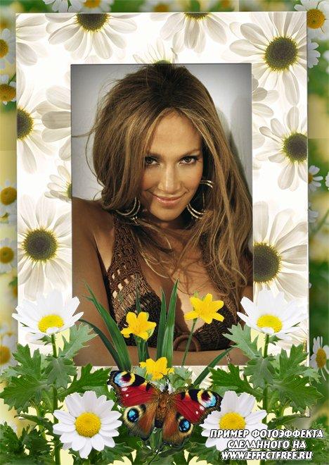 Шикарная рамка с летними ромашками и красивыми цветами, вставить фотку онлайн