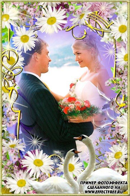 Нарядная рамочка для свадебных фото с ромашками и лебедями, сделать онлайн