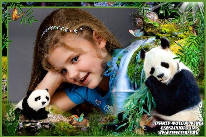 Симпатичная рамка с пандами для фото, сделать рамку онлайн