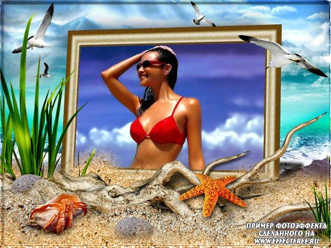 Рамка с чайками, морскими звездами и кораллами, вставить фото онлайн
