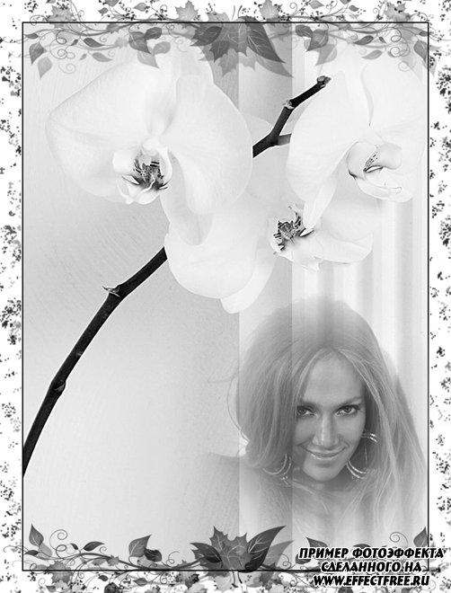 Черно-белый фотоэффект с орхидеей, сделать онлайн