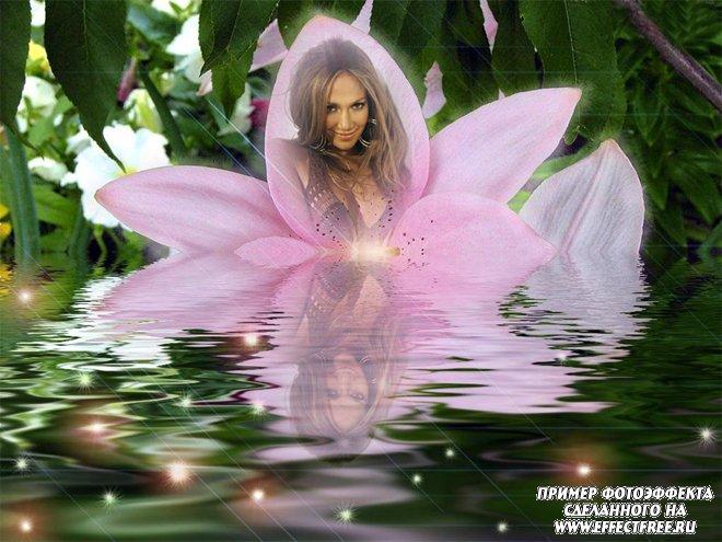 Фотоэффект в лепестке лилии с отражением в воде, сделать онлайн