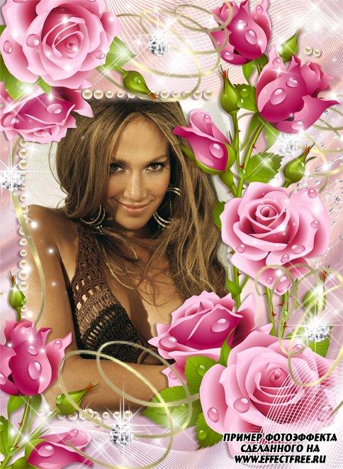 Красивая цветочная рамка с розовыми розами, вставить фото в рамку онлайн