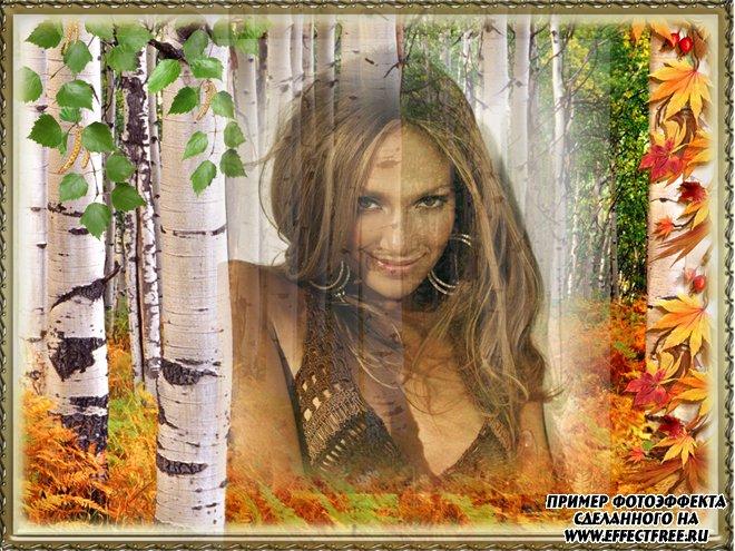 Фотоэффект в осеннем лесу с березами, вставить фото онлайн