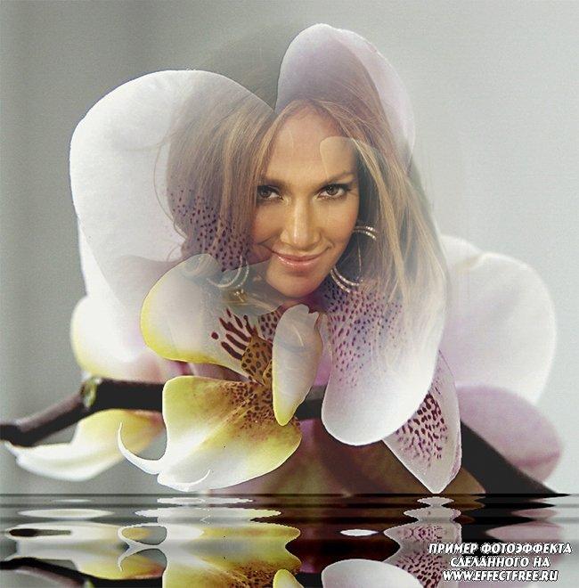 Нежный фотоколлаж с фотографией в цветке орхидеи, сделать онлайн