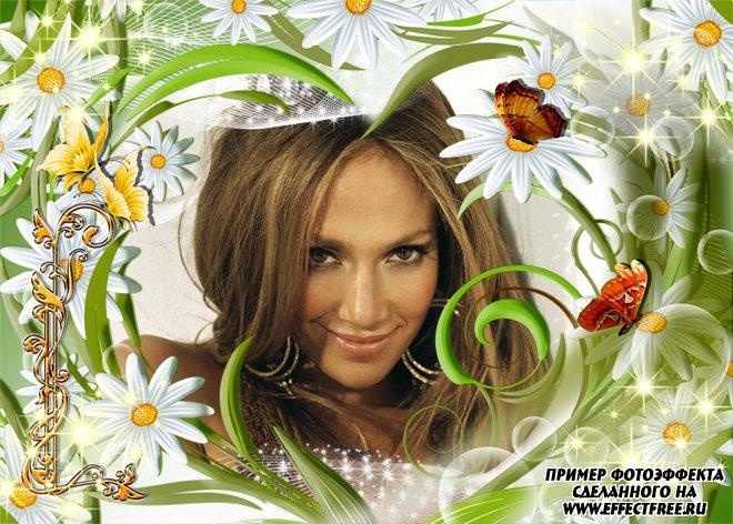 Веселая рамочка с белыми ромашками и бабочками, вставить фото онлайн