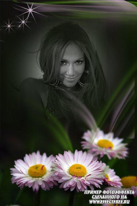 Фотоколлаж с черно-белой фотографией с розовыми цветами, сделать онлайн