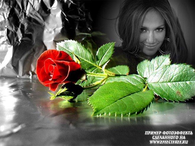 Интересный фотоэффект с черно-белым фото и красной розой, вставить фото онлайн