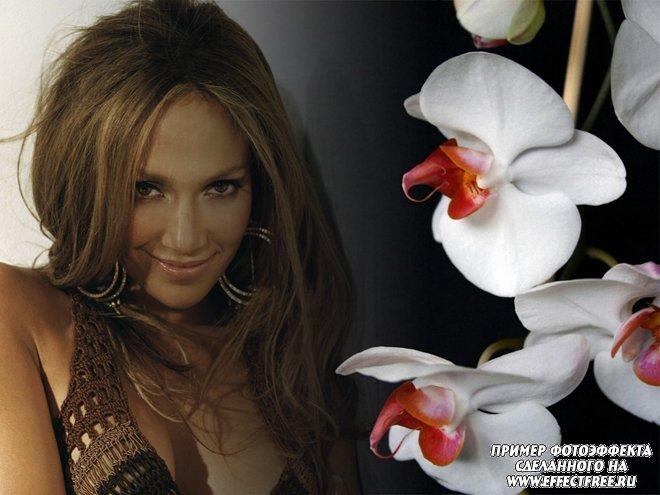 Стильный фотоколлаж с орхидеями, сделать онлайн на сайте