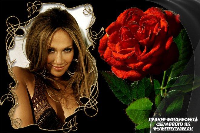 Красивая стильная рамка с красной розой, вставить фото онлайн