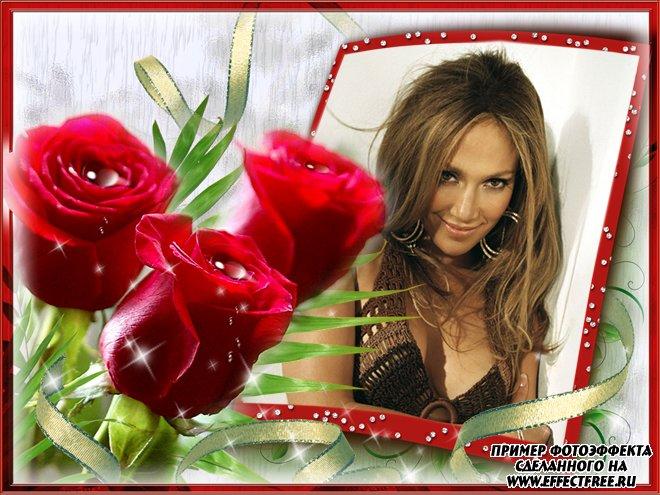 Рамка для фото с тремя красными розами, вставить фото онлайн