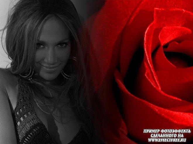 Фотоэффект с алой розой, сделать в онлайн редакторе