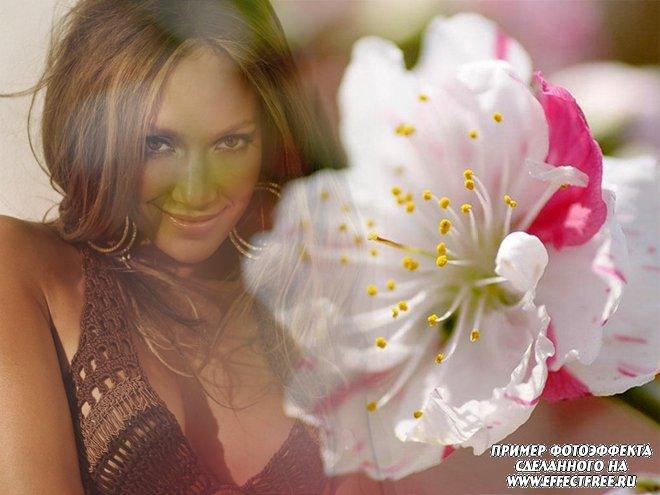 Красивый фотоэффект с цветком яблони, вставить фото онлайн