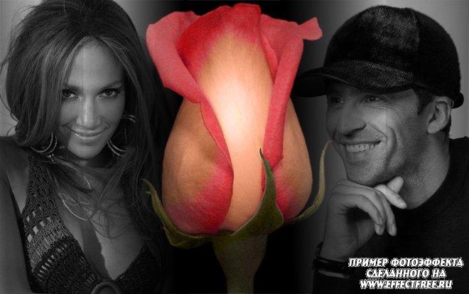 Новый фотоколлаж с розой на две фотографии, вставить фото онлайн