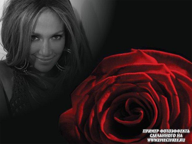 Стильный фотоколлаж с красной розой на черном фоне, вставить фото онлайн