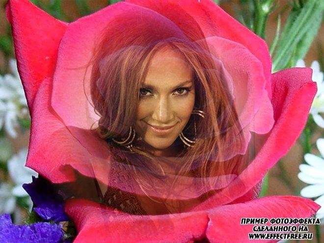 Красочный фотоколлаж в розовой розе, вставить фото онлайн