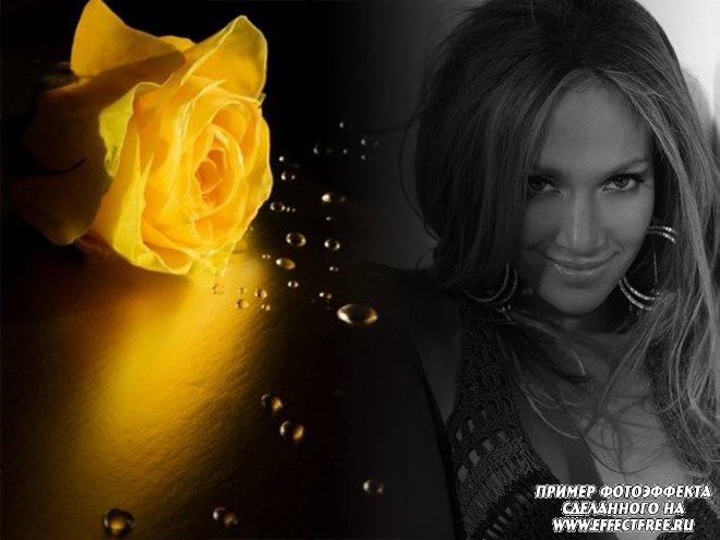 Фотоколлаж с желтой розой и черно-белым фото, сделать онлайн