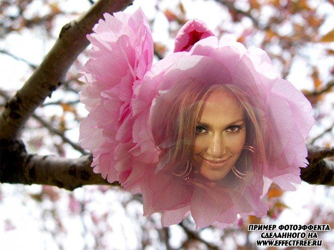 Нежный фотоэффект для девушек в розовом цветке, вставить фото онлайн