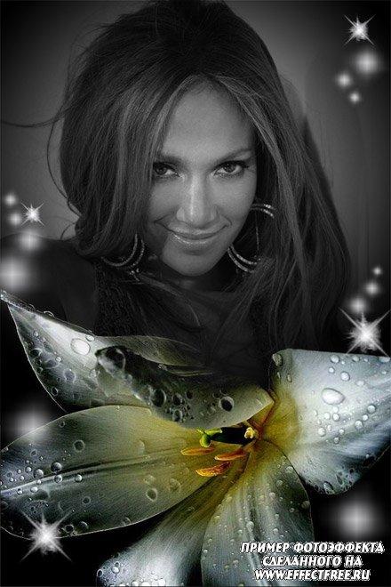 Фотоколлаж с черно-белым фото и белой лилией, вставить фото онлайн