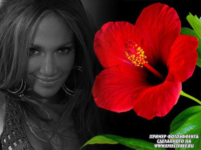 Красивый фотоколлаж с красным цветком и черно-белым фото, вставить фото онлайн