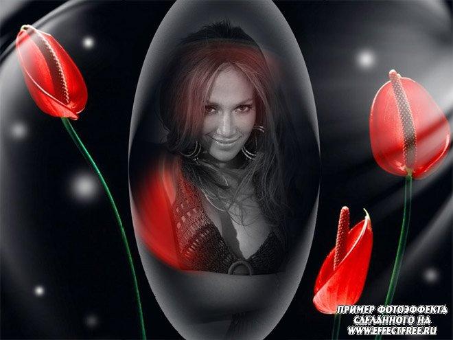Новый фотоколлаж с черно-белым фото и красными тюльпанами, сделать онлайн