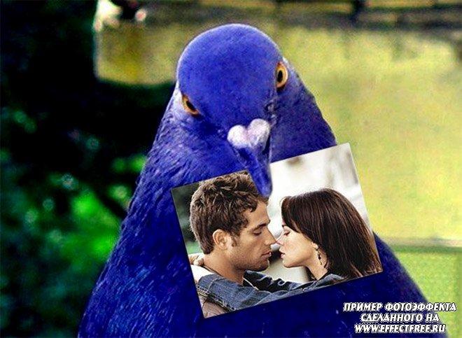 Фотоэффект влюбленным с голубем, вставить фото онлайн