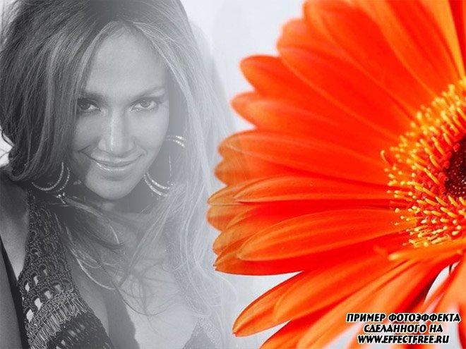 Красивый фотоколлаж с оранжевой герберой и черно-белым фото, сделать онлайн