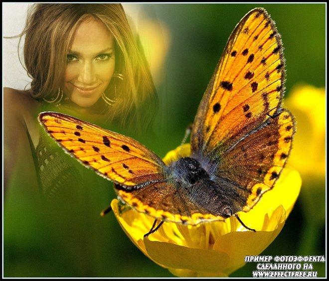 Яркий фотоэффект с красивой бабочкой, вставить фото онлайн