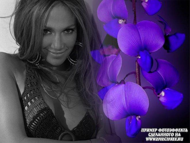 Стильный фотоколлаж с синими цветми и черно-белым фото, сделать в онлайн редакторе